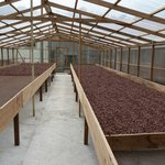 cocoa drying shed
