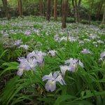 Shikokusangaku Botanical Garden Gakujin no Mori
