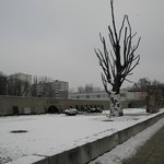Pawiak Museum with the view of the famous elm tree, a silent witness of inhuman cruelty