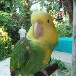 rescued parakeet