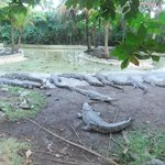 crocodile zoo