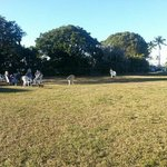 Dogs playing in Founders $16 Park