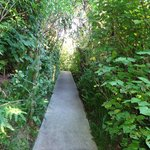Pathway to The Loveshack