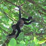 I was officially in *monkey heaven* right in the tree's surrounding the hotel!