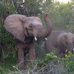 Elephants at Kwa Madwala Private Game Reserve