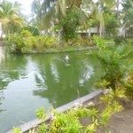 lago dos patos