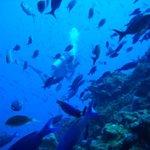 Diving on Saba.