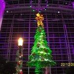 Christmas Tree Lighting in Atrium