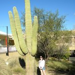 Big Cactus on grounds