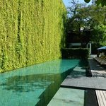 Poolside with awesome green vegitation wall