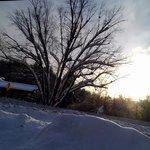Magnifique arbre au lever du soleil