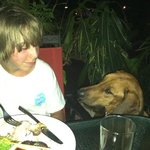 jaeger, the restaurant dog (this is typical costa rica)