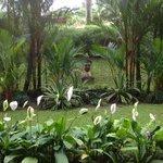 Gardens from restaurant