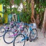 Colinda Cabana bikes