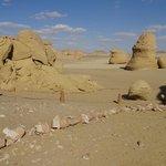 Whale bones in the desert