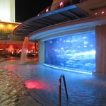 Shark tank / pool area.