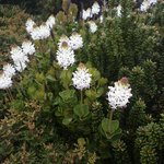 Wildflowers in the Hartz Mountains National Park