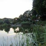 Hotel carp pond