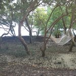 Mangrove area, to the right there is sand beach