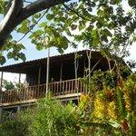 Monkey cabin