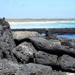 Marine Iguana Hangout - Puerto Ayora