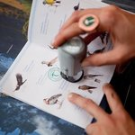 Tracking wildlife in the Kids Passport
