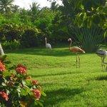 bellisimo jardin y flamencos