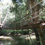 le pont suspendu pour aller dans la maison dans les arbres