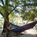 One of several hammocks
