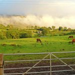 grazing ponies, a little like an oil painting
