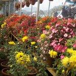 A flower show