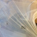 torn mosquito net