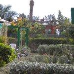 vue de notre terrasse, jardins fleuris