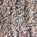 Snäckor i oändlighet på stranden