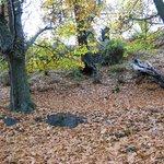 Paisaje de otoño en Lanjarón