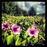 lush vegitation of Cocos Island, off the southern coast of Guam