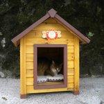 Cat Village Houtong