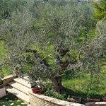 Photo of Agriturismo Rosso di Sera