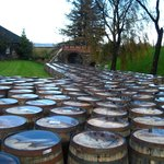 Casks as far as you can see
