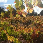 Autumn in Sonoma Valley