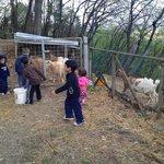 Kids feeding the goats