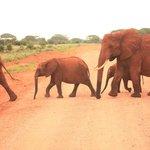 Passeggiata di Elefanti
