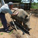Rocky Pequeño Rinoceronte Huerfano
