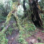Cameron Highlands Jungle Trail No. 1