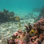 Amuri Sands snorkelling