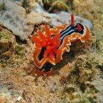 A sea slug on resort wall snorkeling