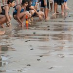 Baby Turtle release at resort.