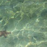 Starfish seen from the jetty