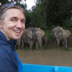Roger with the Bornean elephants