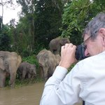 Dad taking Photos of the Bornean elephants